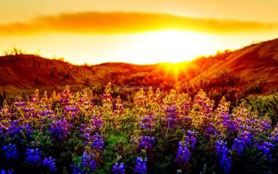Beautiful Sunset !!